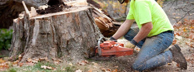 chainsaw stump grinder